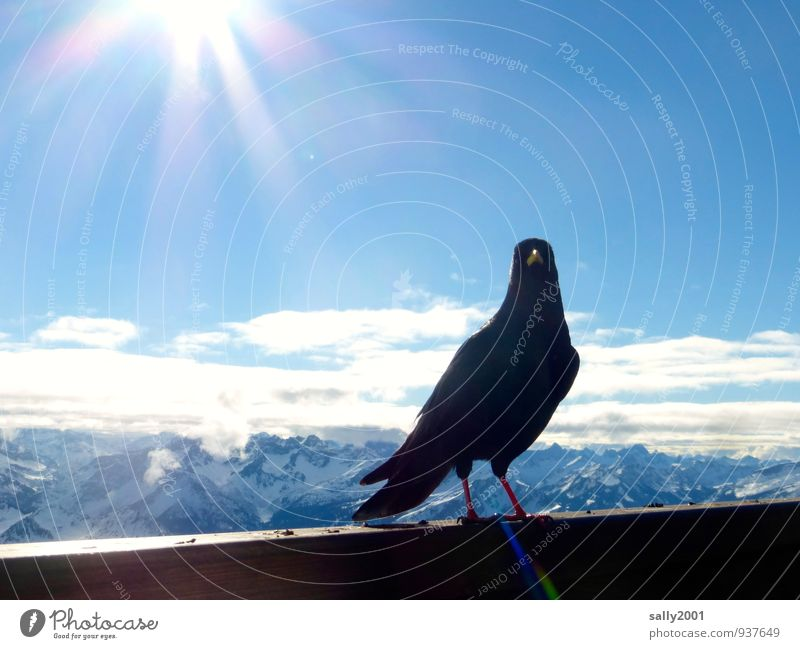 Sky Nature Sun Relaxation Animal Far-off places Winter Black Mountain Bird Horizon Stand Free Tall Esthetic Observe