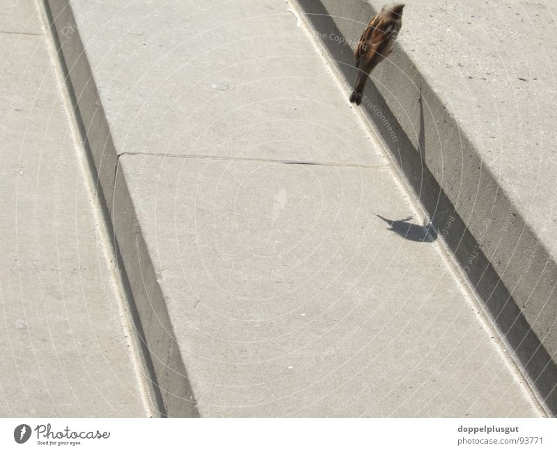 flight of stairs Bird Jump Diagonal Gendarmenmarkt Gray Throstle Stairs Shadow Aviation Flying Movement Free Stone Joy Town