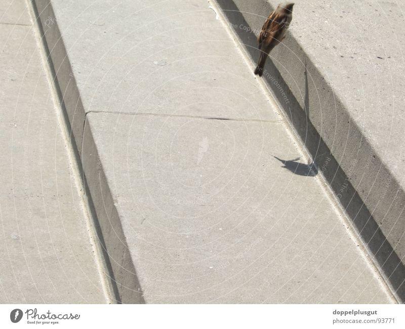 Joy Jump Movement Gray Stone Bird Flying Free Stairs Aviation Diagonal Throstle Gendarmenmarkt