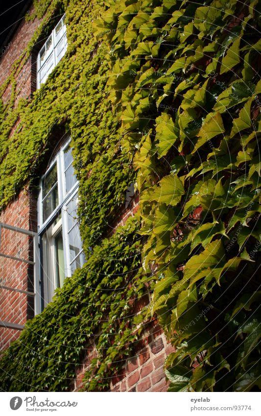 Old Plant Green Beautiful Summer Leaf House (Residential Structure) Window Building Wall (barrier) Garden Park Transience Historic Past Vine