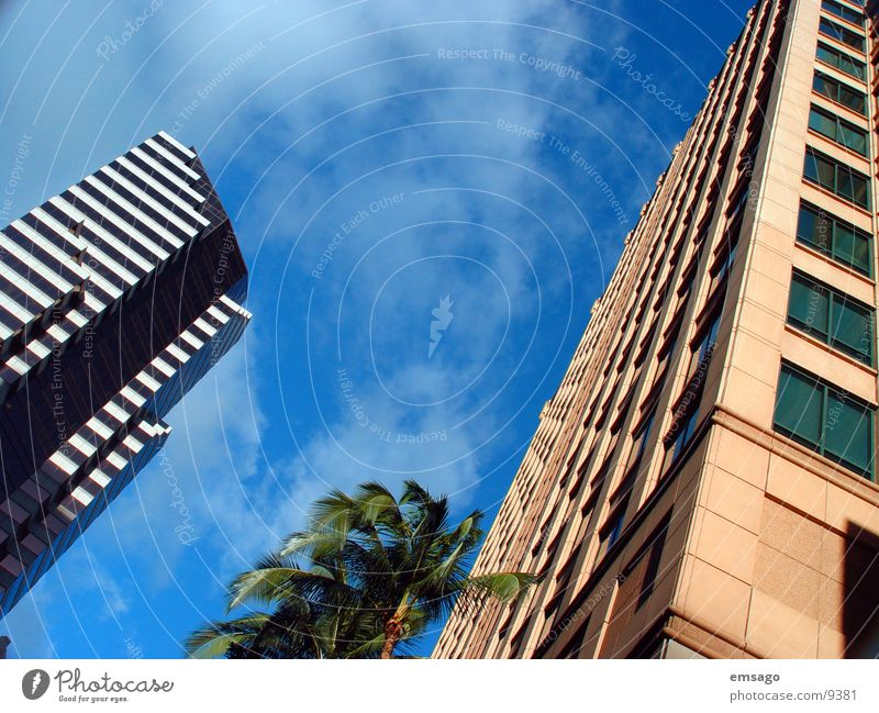Sky Building Architecture High-rise Modern Palm tree Capital city Hawaii Office building