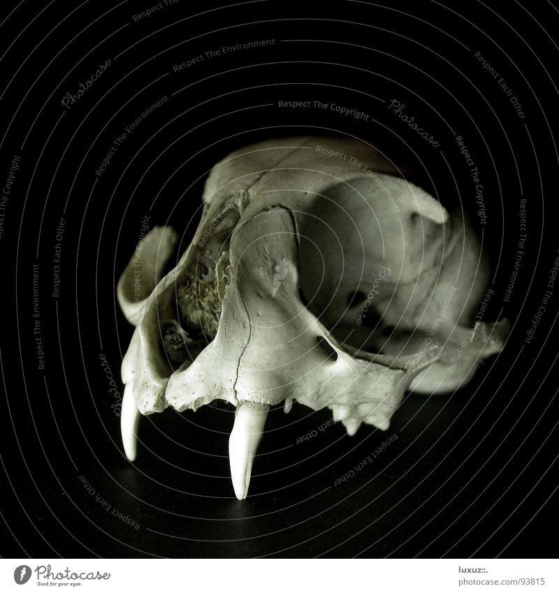 Old Black Dark Death Fear Broken Grief Exceptional Transience Set of teeth Obscure Mammal Magic Devil Eerie