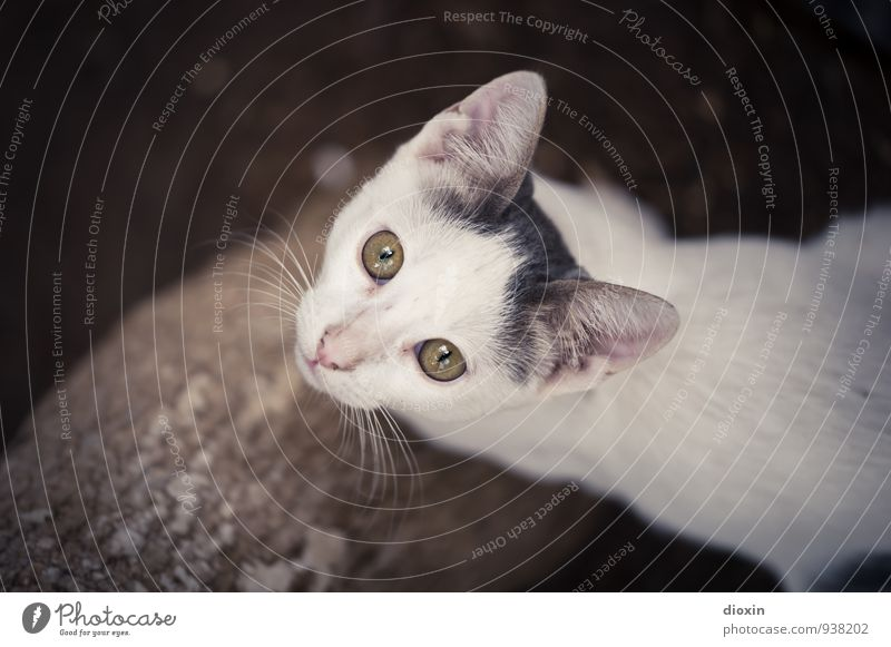 hungry eyes Animal Pet Cat Animal face 1 Baby animal Looking Cuddly Cute Nature Colour photo Exterior shot Copy Space left Day Animal portrait
