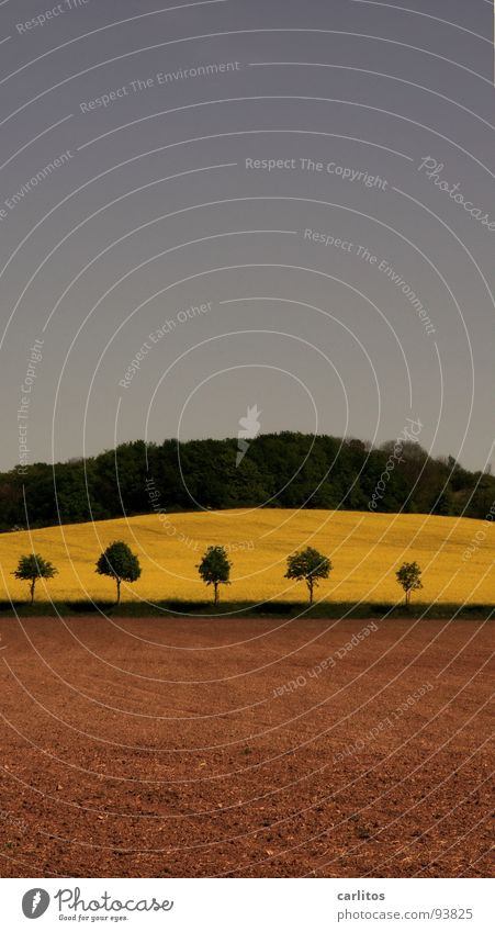 Sky Green Tree Forest Landscape Spring Earth Brown Field Hill Agriculture Canola Canola field Fallow land Dark green