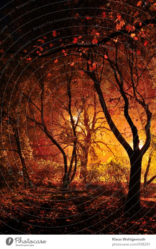 Dark visions in black, red, gold Football pitch Nature Landscape Plant Night sky Autumn Tree Bushes Park Forest salow Illuminate Threat Creepy Brown Yellow Gold