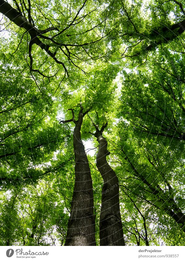 Sky Nature Vacation & Travel Plant Green Summer Tree Landscape Far-off places Forest Environment Emotions Freedom Moody Leisure and hobbies Tourism