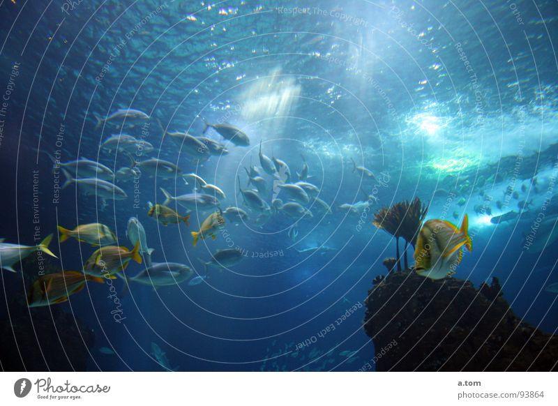 evening rush hour Ocean Dive Light Sunbeam Portugal Lisbon Aquarium Fish Water Reflection Blue