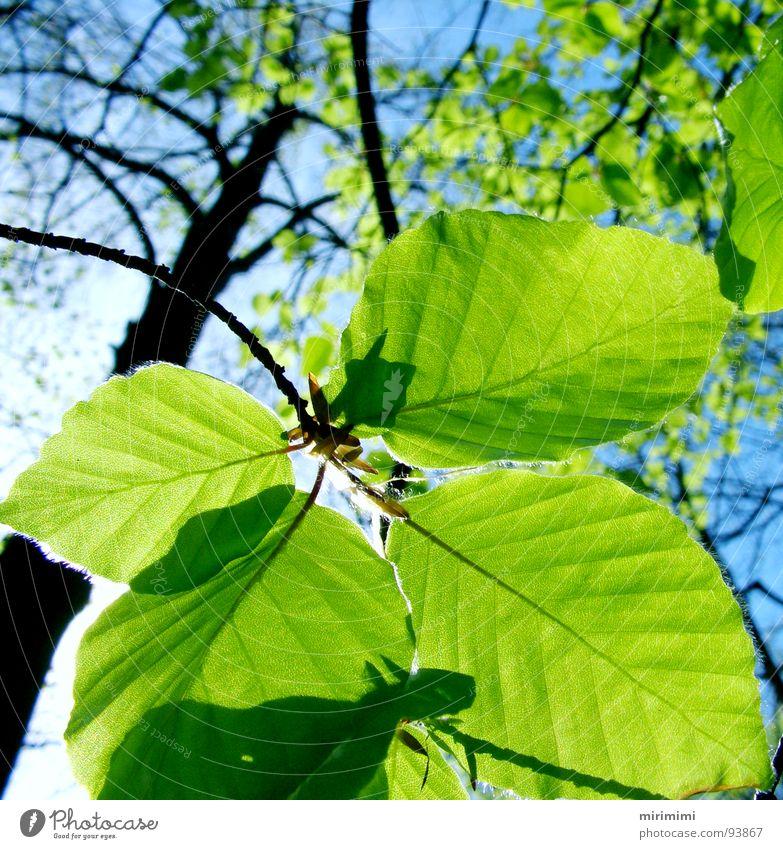 leaf shadow Leaf Forest Tree Transparent Shadow Blue Sky