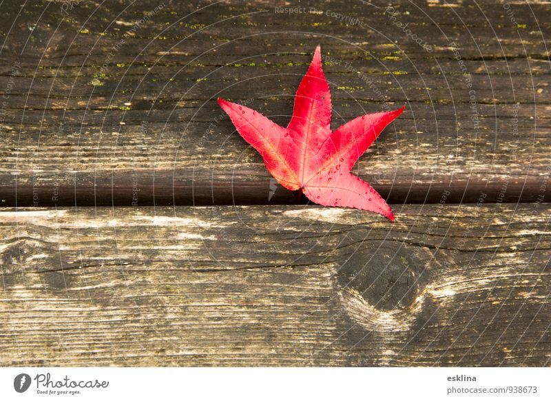 autumnleaf Autumn Leaf Wood Drop Nature Change Colour photo Exterior shot Close-up Deserted Day