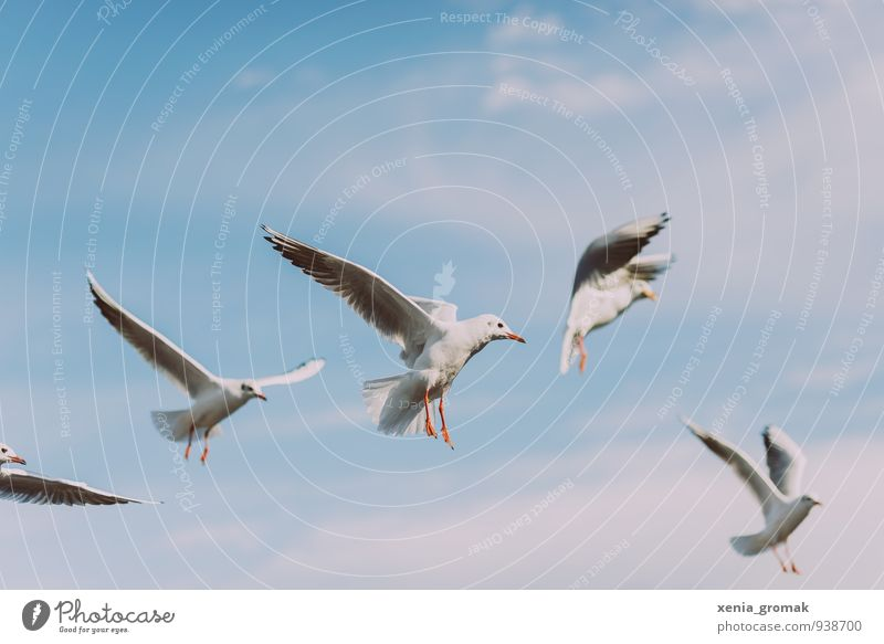 gulls Lifestyle Leisure and hobbies Playing Vacation & Travel Tourism Trip Adventure Far-off places Freedom Summer Environment Animal Sky Cloudless sky Clouds