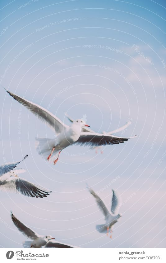 seagull Nature Animal Sky Cloudless sky Clouds Beautiful weather Wild animal Bird Pigeon 1 4 Group of animals Blue Turquoise White Euphoria Bravery Success