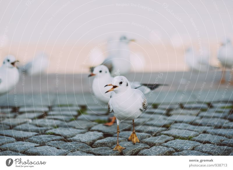 bird Environment Nature Animal Climate Weather Old town Bird 1 Group of animals Esthetic White Friendship Love of animals Movement Freedom Leisure and hobbies