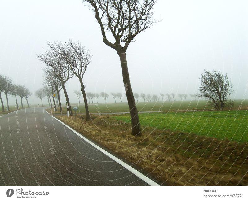 Tree Green Winter Loneliness Street Cold Autumn Gray Rain Brown Field Fog Wind Wet Vantage point