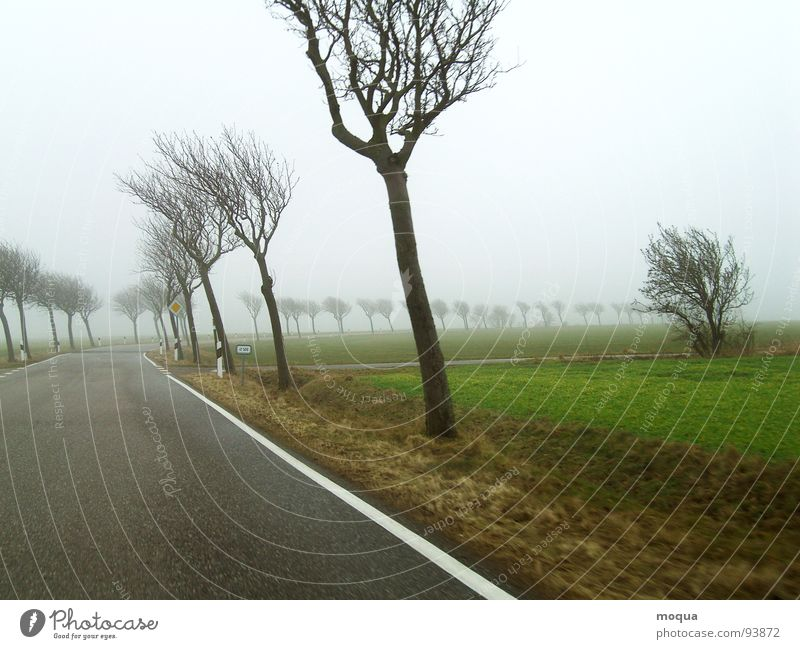 wind misalignment Autumn Winter Cold Wet Tree Country road Loneliness Comfortless Gray Field Fog Bad weather Dreary Rain Green Brown Yield sign Wind Street