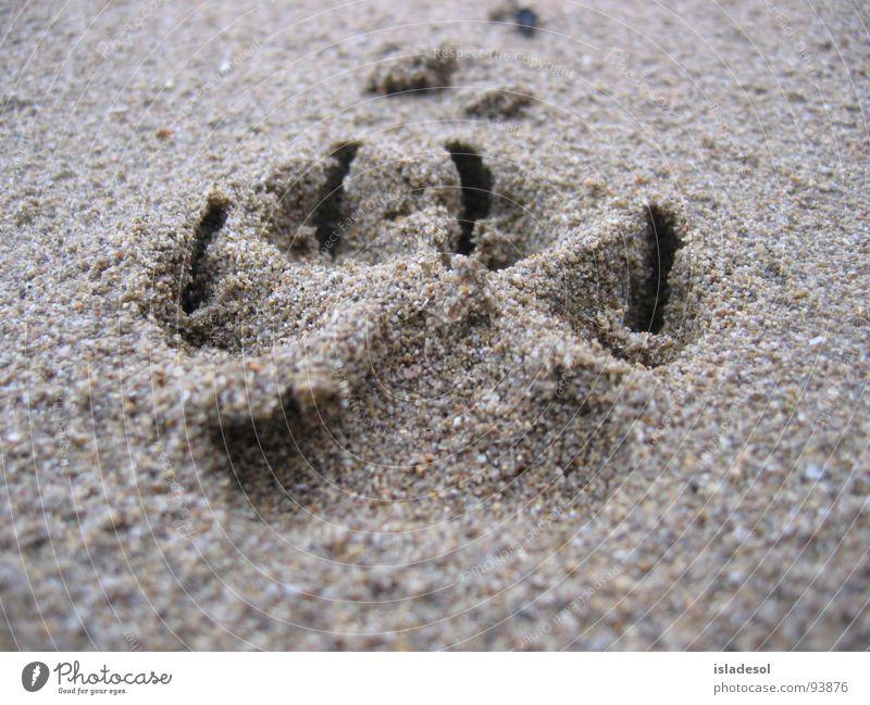Joy Beach Animal Moody Power Coast Walking Force Soft Hundred-metre sprint