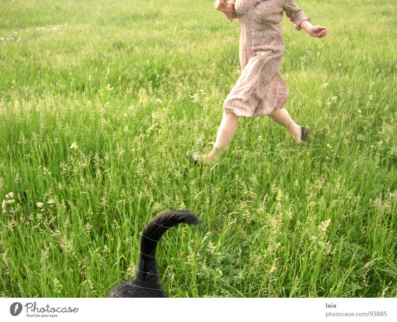 run Jump Dog Meadow Spring Joy fun flowers grass tail