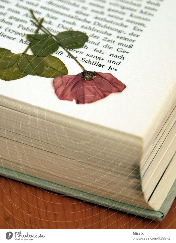 Pressed for eternity Leisure and hobbies Reading Handicraft Flower Blossom Souvenir Collection To dry up Dry Moody Memory Canned Page Book Dried flower