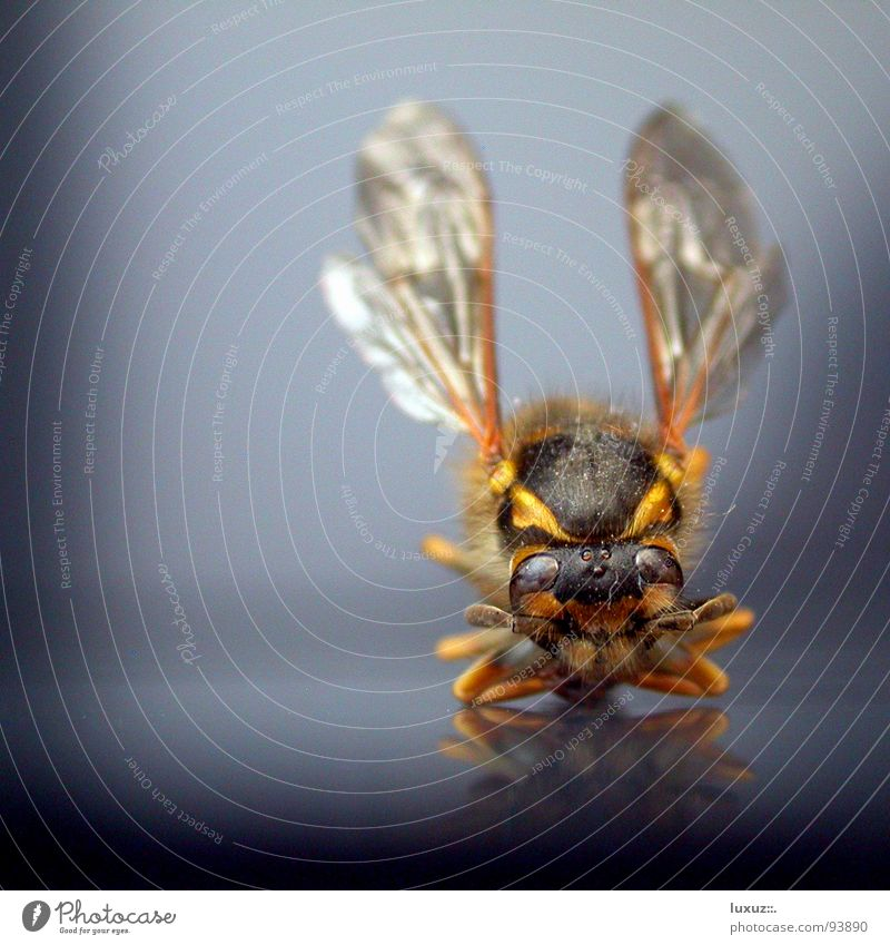 Joy Mouth Wing Insect Bee Grinning Striped Departure Frontal Wasps Whistle Sit Cross Legged