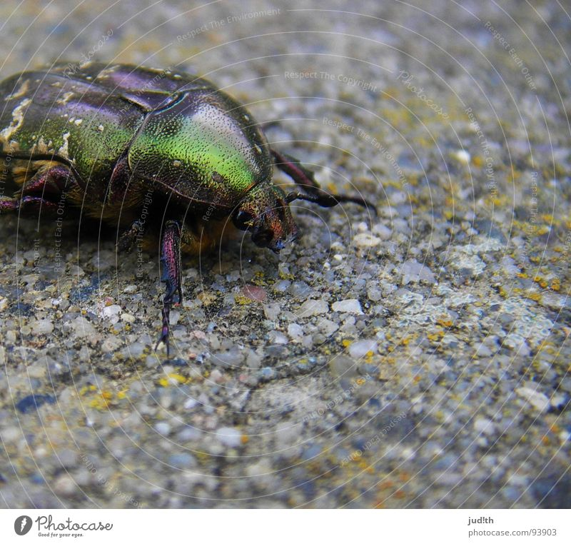 Nature Green Beautiful Animal Spring Stone Garden Legs Gold Flying Glittering Broken Wing Insect Beetle Crawl