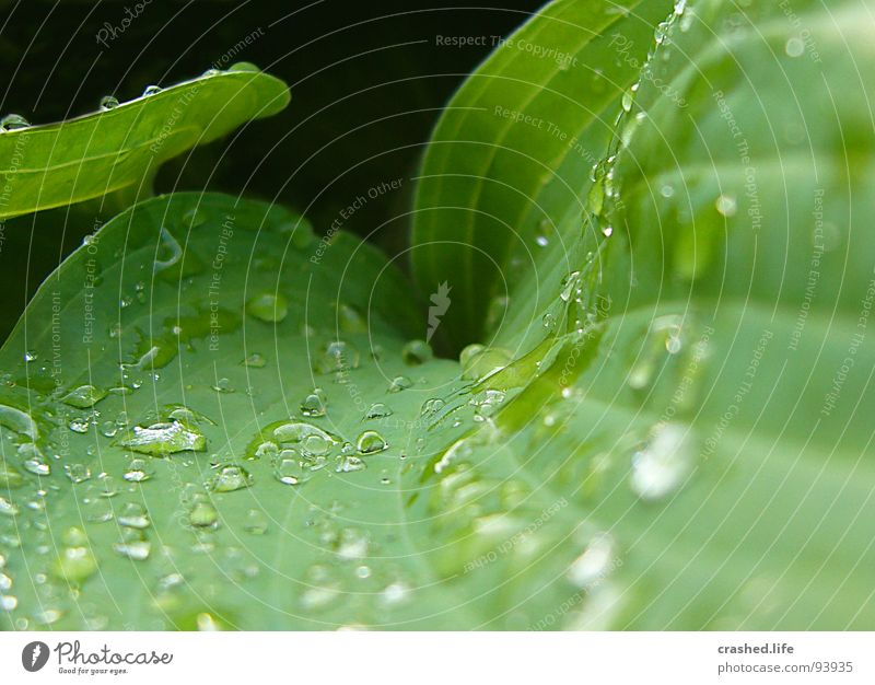 Nature Plant Green Water Black Garden Rain Drops of water Wet Clarity Near Crystal structure Striped Damp Lettuce Food