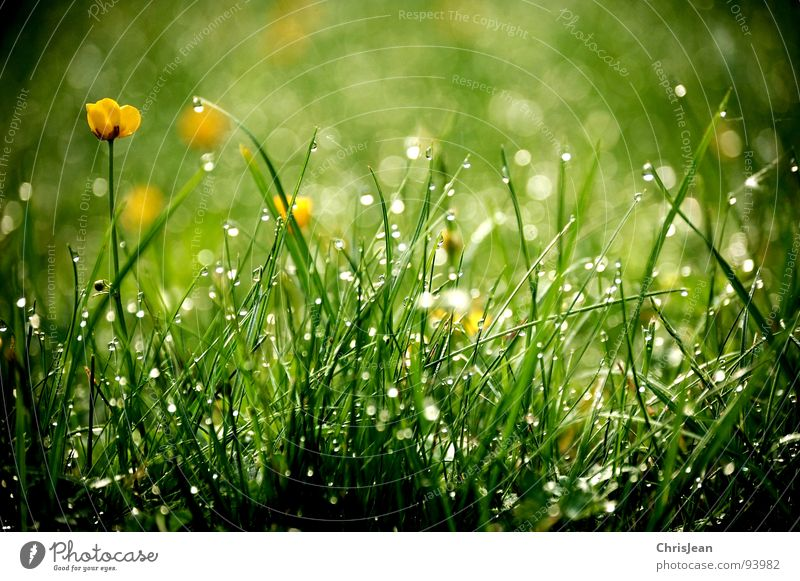 Nature Plant Green Water Relaxation Flower Calm Life Spring Meadow Grass Background picture Garden Park Stand Bushes