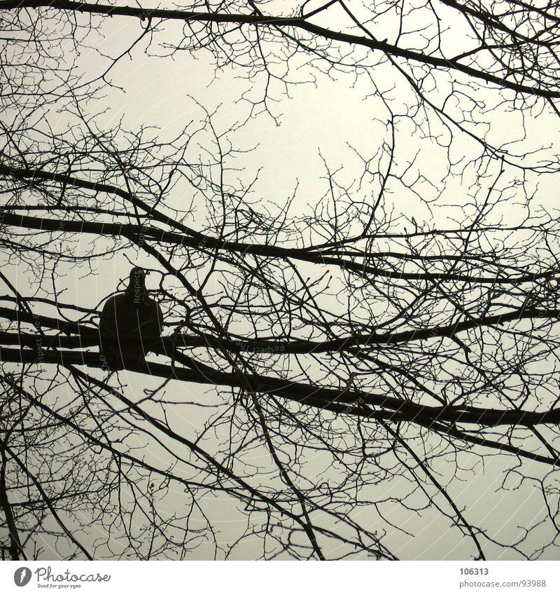 Nature Tree Joy Freedom Bird Flying Peace Change Pigeon Branchage