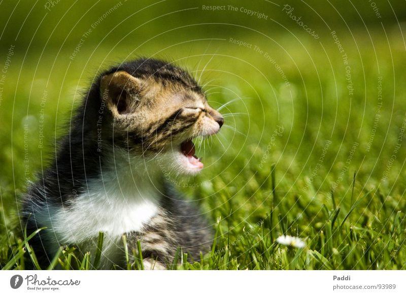 Cat Green Summer Meadow To talk Warmth Grass Small Garden Fear Dangerous Sweet Threat Physics Hot Scream