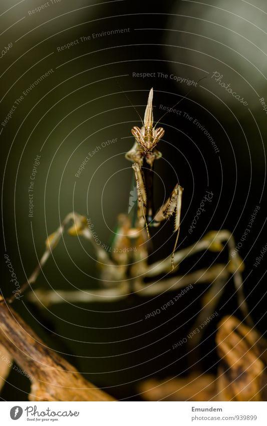 Eroticism Animal Watchfulness Praying mantis
