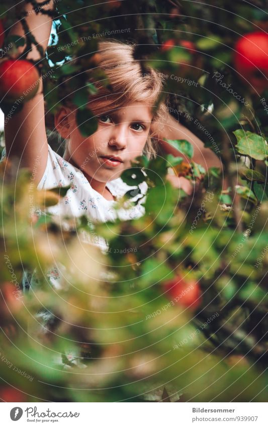 . Fruit Apple Organic produce Human being Feminine Child Girl Family & Relations Infancy Face 1 3 - 8 years 8 - 13 years Nature Plant Tree Leaf Apple tree