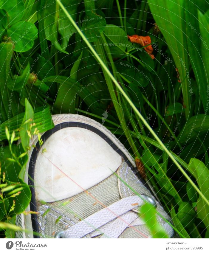 White Green Beautiful Leaf Black Gray Grass Footwear Clothing Stripe Silver Blade of grass Chucks Leather Shoelace