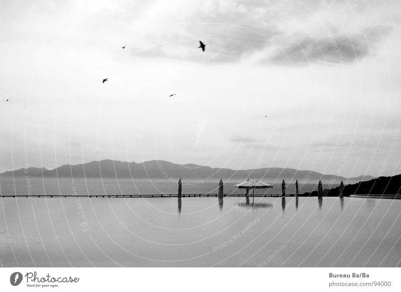 *dream* Vacation & Travel Ocean Bird Swimming pool Black White Sunshade Clouds Dark Water Island Sky