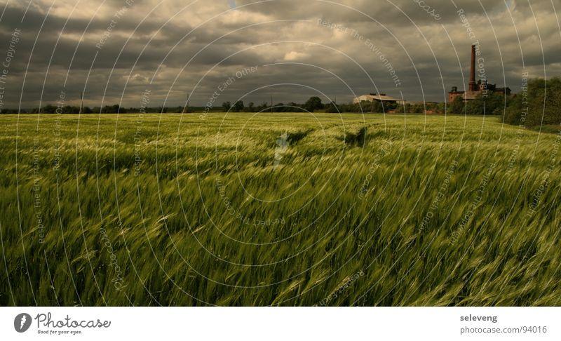 WindCloudsWheat Field weat Thunder and lightning Rain Nature sun Movement Weather