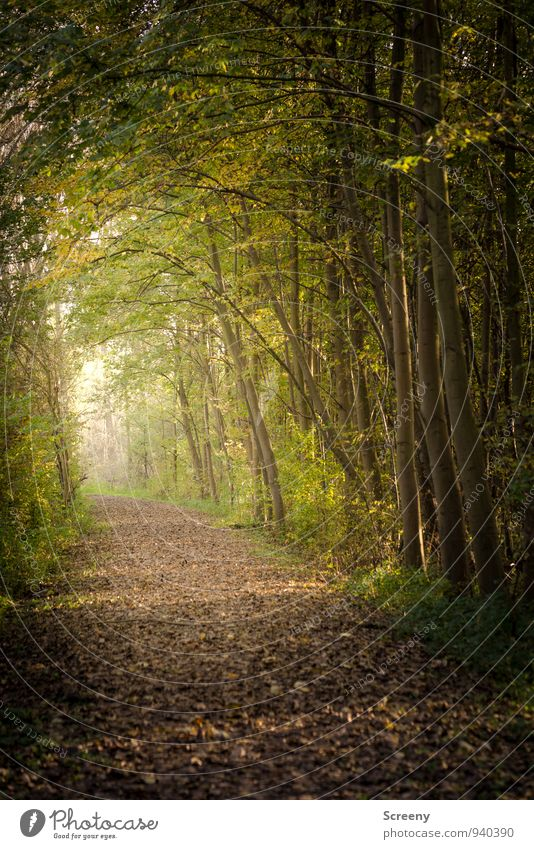 Autumn Hiking Nature Landscape Plant Beautiful weather Tree Grass Bushes Wild plant Forest Growth Brown Yellow Green Far-off places Lanes & trails Leaf