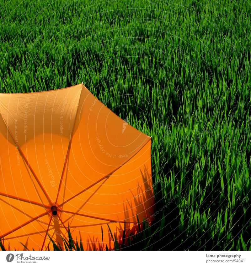 shadow play Cloppenburg Umbrella Sunshade Storm Clouds Grass Blade of grass Meadow Summer Field Green Spring Calm Loneliness Relaxation Sunbathing Forget