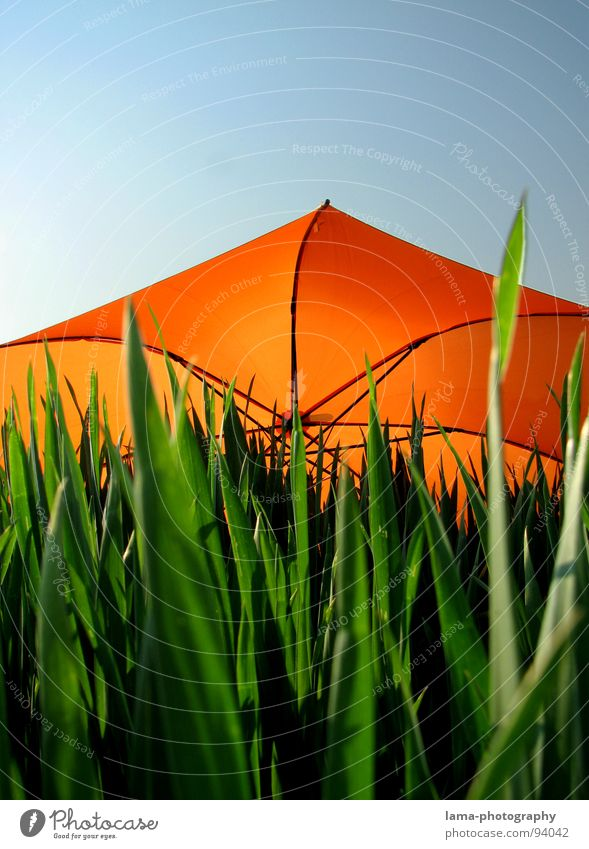 trinity Cloppenburg Umbrella Sunshade Storm Clouds Grass Blade of grass Meadow Summer Field Green Spring Flower meadow Environment Summery Plant Sunbeam Rainbow