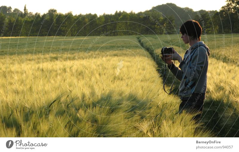 Youth (Young adults) Sky Tree Green Forest Field Gold Camera Grain Photographer Take a photo Wheat Tracks Tractor track