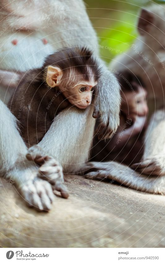 gang Animal Wild animal Animal face Zoo Monkeys Baby animal Animal family Small Soft Cute Colour photo Exterior shot Day Shallow depth of field Animal portrait