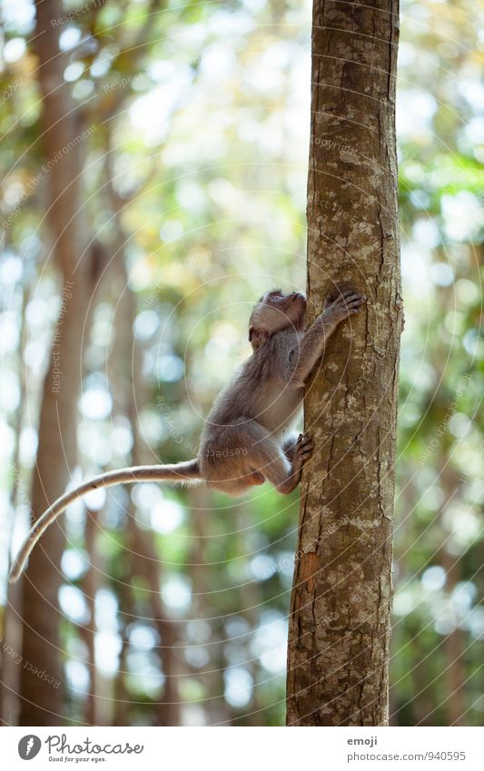 Animal Baby animal Natural Wild animal Curiosity Climbing Zoo Monkeys