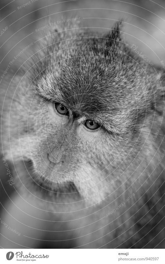 Animal Gray Wild animal Cute Pelt Zoo Monkeys