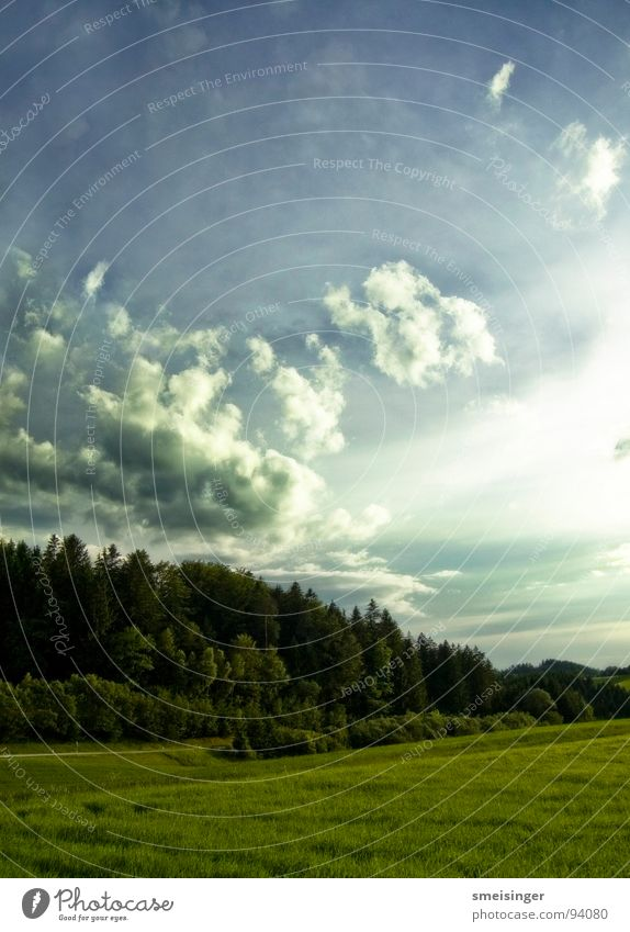Nature Sky Tree Sun Green Blue Summer Clouds Far-off places Forest Meadow Grass Freedom Field Natural Americas