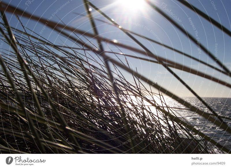 sea grass Beach Ocean Grass Sand North Sea