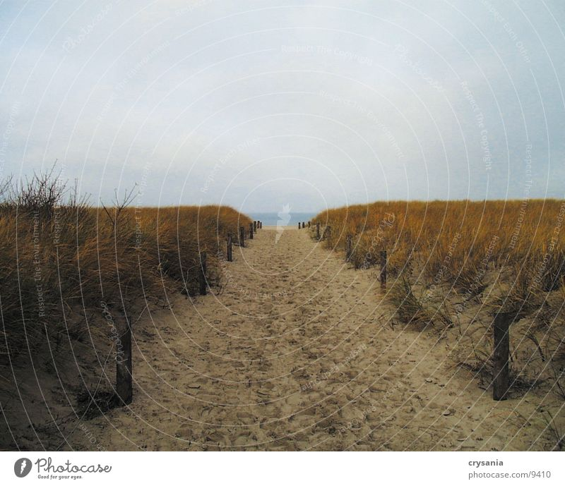Water Ocean Beach Beach dune Baltic Sea