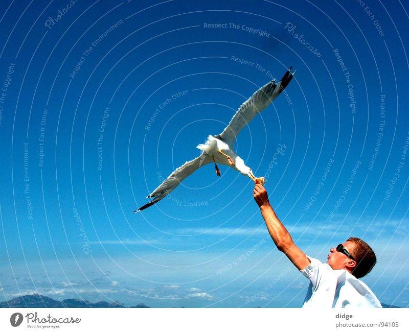 Contact Seagull Bird Strike Connect Exterior shot Snapshot Peace Sky