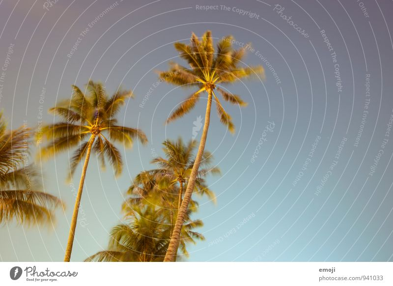 NIGHT ACCEPTANCE Environment Nature Plant Sky Cloudless sky Summer Beautiful weather Wind Tree Foliage plant Warmth Blue Night shot Palm tree Colour photo