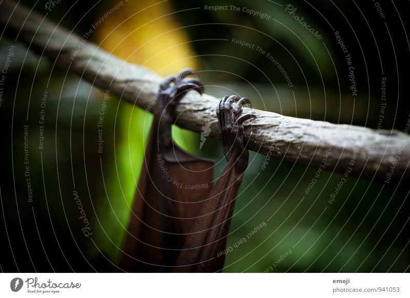 what's hanging there? Environment Nature Animal Wild animal Claw Zoo Bat 1 Dark Creepy Colour photo Exterior shot Close-up Detail Deserted Twilight