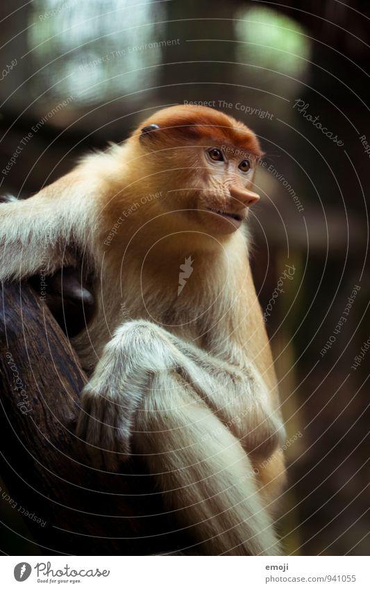 Animal Wild Wild animal Animal face Zoo Monkeys