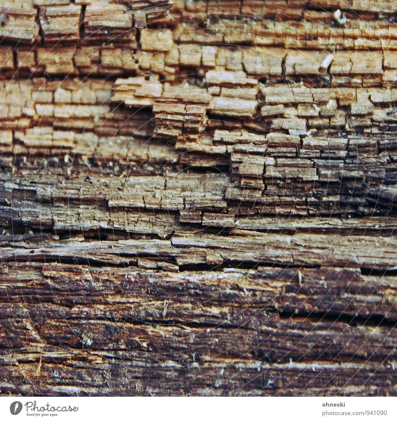 wood Wooden stake Pole Line Old Transience Brittle Colour photo Subdued colour Exterior shot Abstract Pattern Copy Space middle Day Contrast