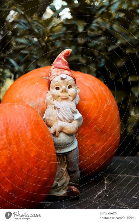 Dwarf and pumpkin Nature Autumn Pumpkin Garden gnome Orange Meditative Colour photo Exterior shot Copy Space top Looking Looking into the camera