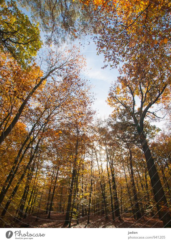 autumn forest. Nature Landscape Plant Sky Sun Autumn Tree Park Forest Faded Growth Multicoloured Warm-heartedness Transience Leaf Deciduous tree