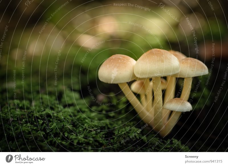 Small gang Nature Plant Autumn Mushroom Mushroom cap Moss Forest Growth Cute Brown Yellow Green Safety Safety (feeling of) Friendship Serene Patient Calm